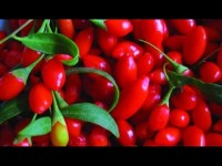 Can Goji berry kill cervical cancer