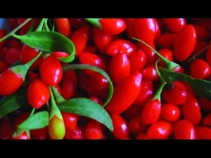 Goji berries can destroy cervical cancer